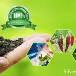 Siver Nanoparticles for Agriculture